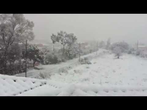 Olbia nevicata 12.02.12