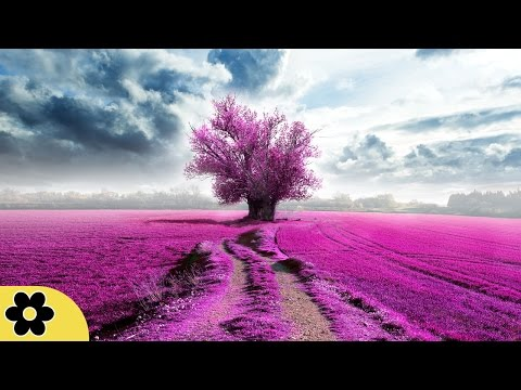 Reiki Meditation Music, Relax Music, Music for Stress Relief, Soft Music, Background Music, ✿2824C
