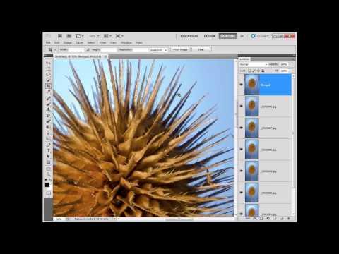 Focus stacking i fotografia makro - łączenie zdjęć o różnej ostrości w Photoshopie