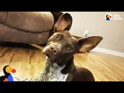 Rescue Dog Rescued From Drug House Finally Gets To Be A Puppy - BRANDI | The Dodo