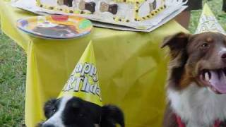 Doggie Bag Cafe Pet Party Planners