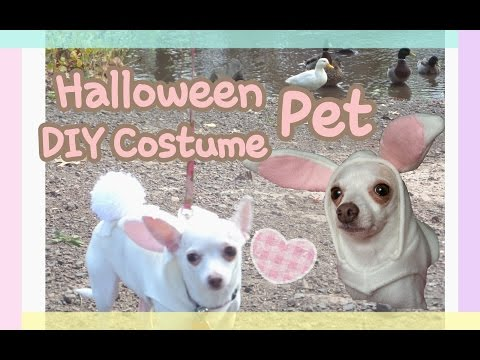 DIY Kawaii Bunny Chihuahua Dog Costume | Halloween