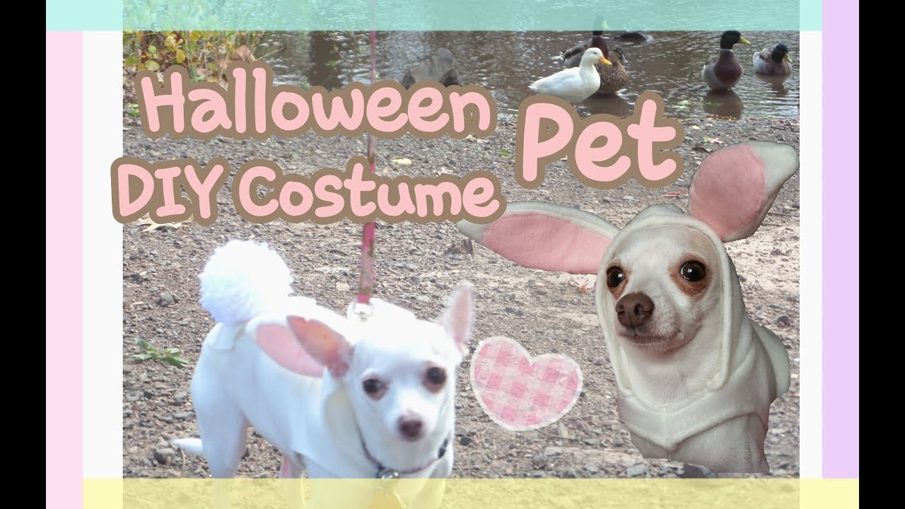 DIY Kawaii Bunny Chihuahua Dog Costume | Halloween & DIY Kawaii Bunny Chihuahua Dog Costume | Halloween - YouTube