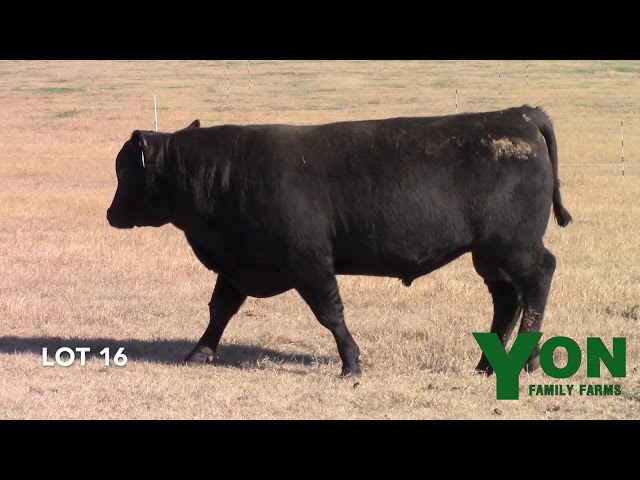 Yon Family Farms Lot 16