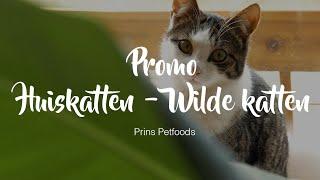 Promo Docu Huiskatten Wilde katten