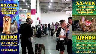 Выставка собак в Запорожье 2011 год (17-18 сентября)