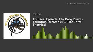 TDI Live: Episode 11-- Baby Burms, Tarantula Outbreaks, & Flat Earth Theories!