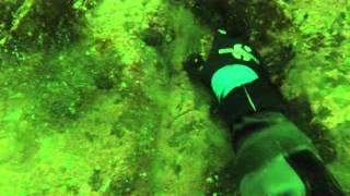 Southeast Seafoods Wild Alaska Sea Cucumber Harvest