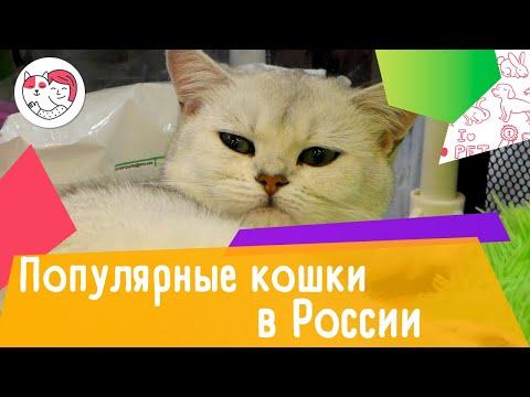 5 самых популярных пород кошек в России