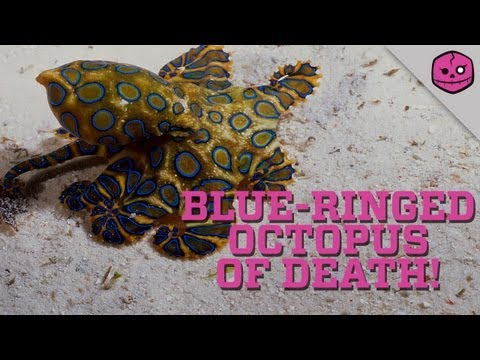 Australia's Blue-Ringed Octopus will DESTROY you!