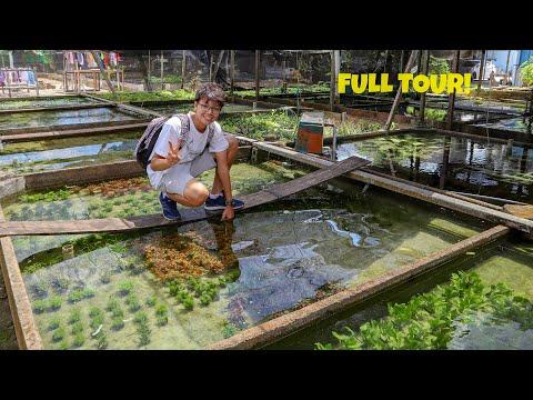 INCREDIBLE AQUATIC PLANT FARM In Singapore - FULL TOUR!