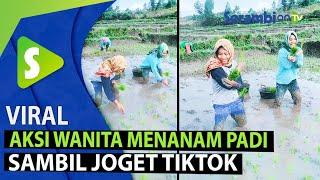 Download VIRAL Aksi Gadis Menanam Padi Sambil Joget TikTok, Videonya Telah Ditonton 10 Juta Kali