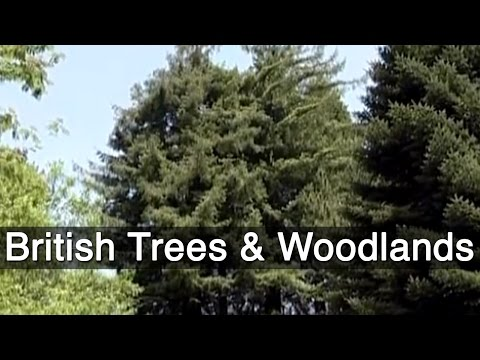 British Trees & Woodlands