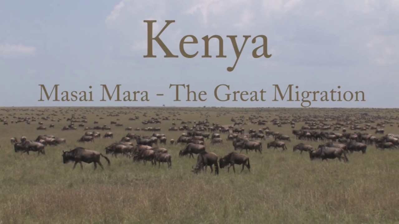Masai Mara The Wildlife Collection