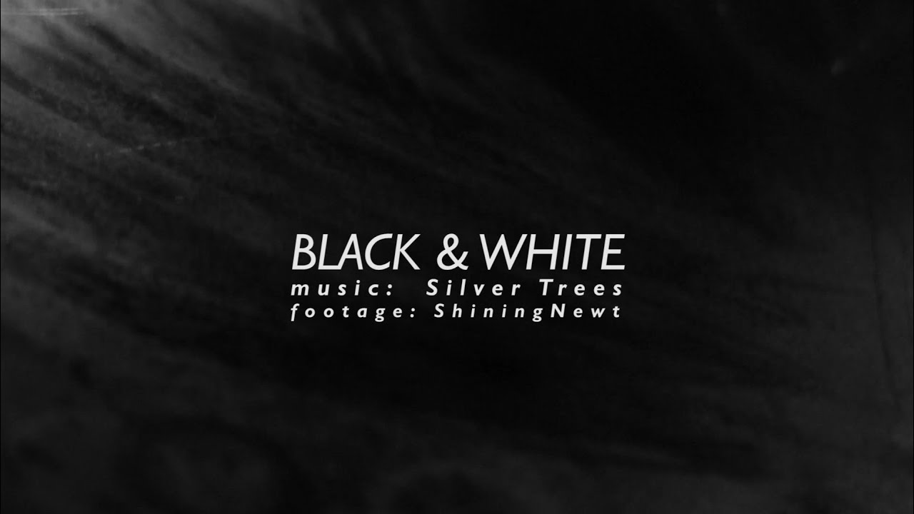 Black white music by silver trees footage by shiningnewt