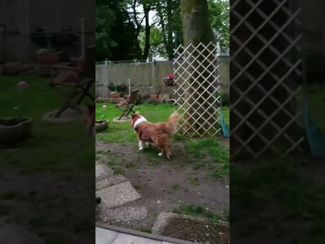 Dino läuft durch den Garten