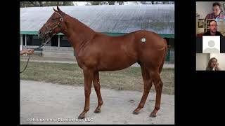 Secrets of Thoroughbred Horse Conformation