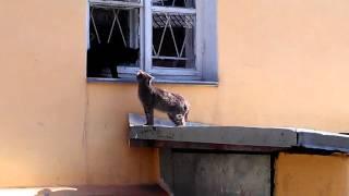 Гады. Весенний гон начался у кошек.