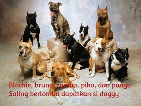 Shaggy Dog - Anjing Kintamani + Lirik