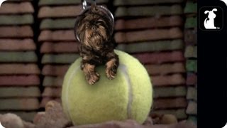 "Sneek Peak Miley Cyrus - Wrecking Ball Parody - ""Tennis Ball"""