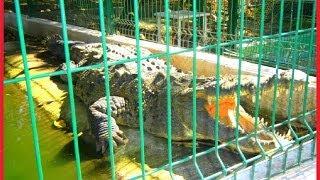 #Manglares de Mexico La Tovara y sus cocodrilos San Blas Viajes #Nayarit México 2014