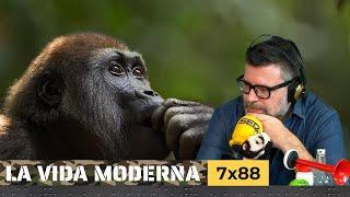 La Vida Moderna | 7x88 | Rodillas fuertes y buenas hostias