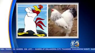 The Truth About The Big Chicken