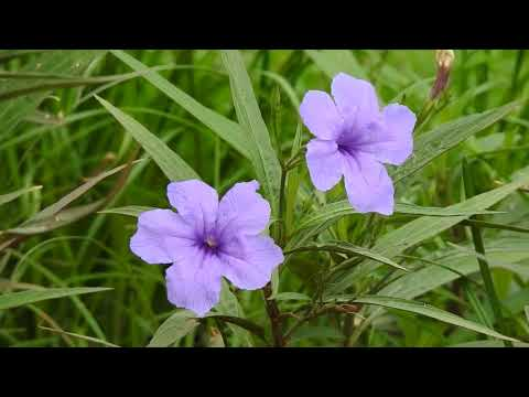 Purple Flowers in the Green Grass Field | FREE Wedding Background HD thumbnail