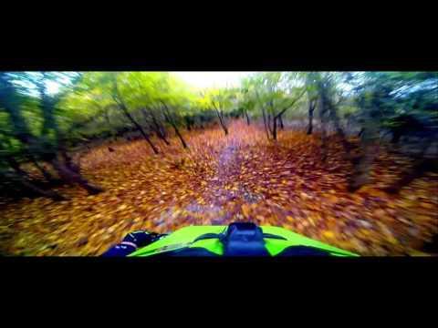 Geroniminime Friston forest