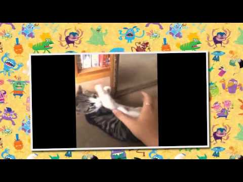 New Funny cats chasing lasers - Funny cats running into walls - Funny cats
