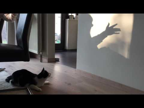 Cat attacks shadow of hand!