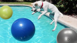 SURPRISING MY LABRADOR PUPPY WITH GIANT YOGA BALLS!!