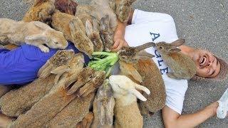 見渡す限りモッフモフ!ウサギまみれになれる天国
