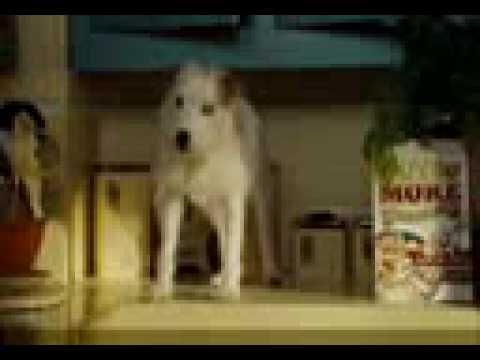 Trailer do filme Um hotel bom pra cachorro
