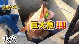超大穴の際から硬玉を落としたら覚えのない引きの巨大魚が釣れてたまがった!