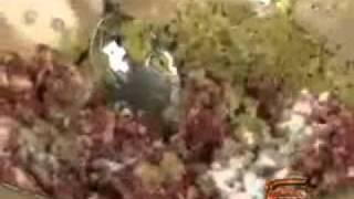 видеорецепты - Долма рецепт приготовления.flv(видеорецепты., 2011-10-09T17:13:24.000Z)