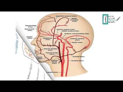Blood supply of the brain - YouTube
