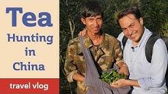 Tea Hunting Adventures in China - Yunnan Gushu Sheng PuErh Travel Vlog
