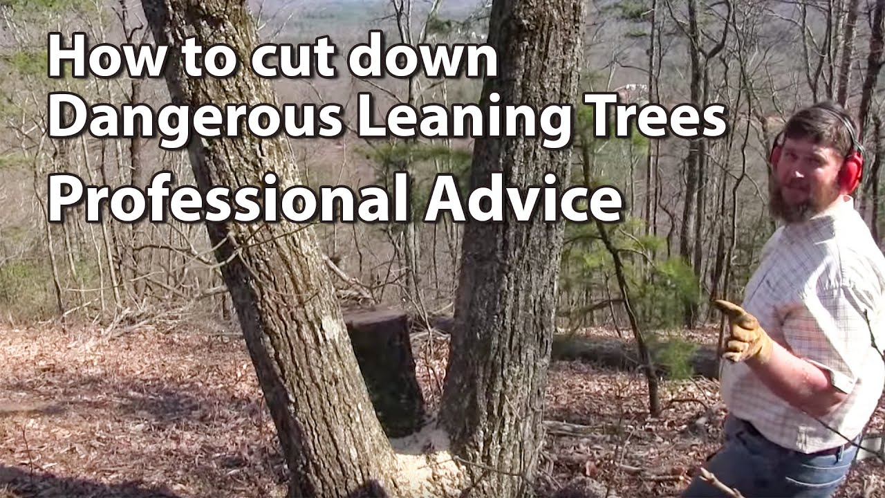 Cutting Down Dangerous Trees Professional Advice