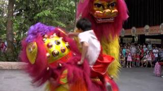 Northern Lion Dance Singapore Zoo - Chinese New Year