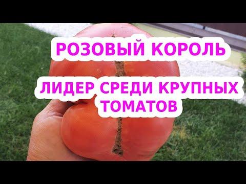 Розовый король - лучший сорт розовых помидор - самый сладкий розовый томат