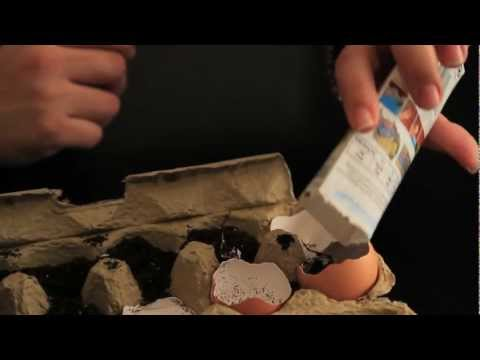 Krrb Presents Quick Tips — How to Start Gardening Using Eggshells