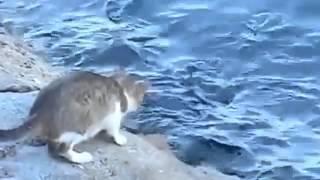 강태공도 울고갈 고양이의 낚시실력