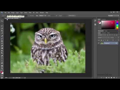 Уроки Фотошопа. Начинаем работать с изображениями