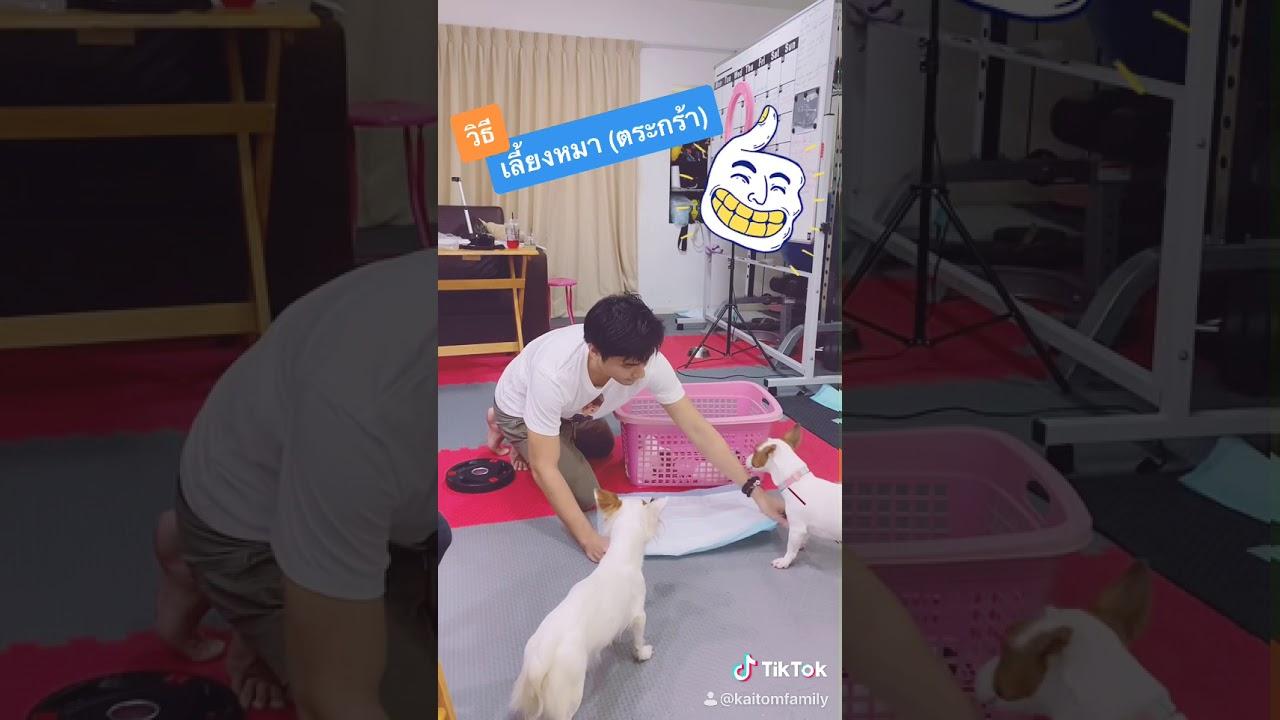 เทคนิค! การเลี้ยงหมาในตระกร้า แบบง่ายที่สุดใน3โลก