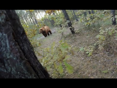 Bear Attack, Man is trying to run away from...