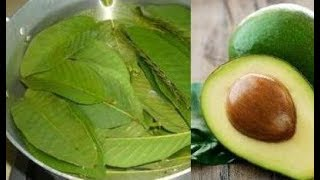 Drink Avocado Leaf Tea And Gain These Health Benefits