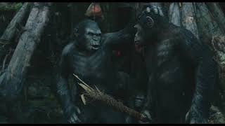 "Koba to Blue Eyes ""Scars make you stronger"" 