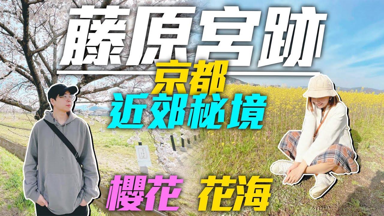 👨🌾京都近郊秘境👩🌾|關西最大の油菜花田🌻「藤原宮跡」|🌸帶你看櫻花滿開&花海的絕景😍|Kiu & Chung