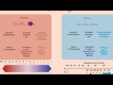 Part 1: Acidosis and Alkalosis: Metabolic or Respiratory.mp4